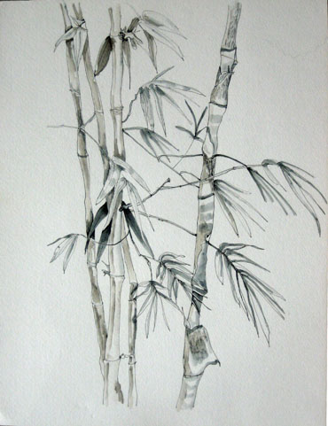 Lao Bamboo by Nancy Niederhauser